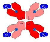 Haemoglobin2